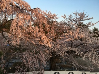 hirosaki20160421b.jpg